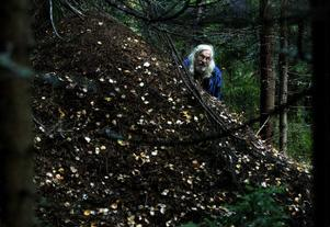 Myrstacken intill Norrgårdsbovallen fäbod är med sin mer än två meters höjd betydligt högre än Jan