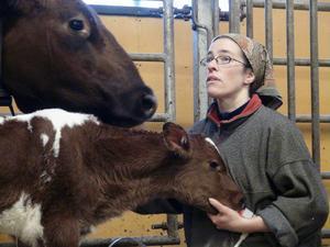 Totalt finns det 140 djur på Yttergärde lantbruk i Oviken. Åsa Gustafsson, nominerad till Årets gröna guld tillsammans med brodern Mats, har fullt upp att göra.
