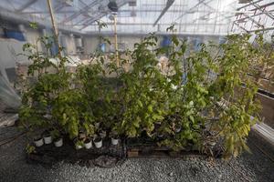 Det är bara mitten av april och plantorna inne i varmväxthuset har redan vuxit sig höga.