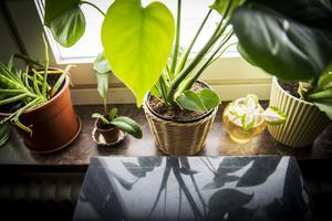 Växterna ger liv till inredningen.
