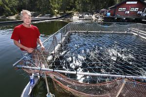 Lars-Åke Jansson, ägare av Fogdö Lax, visar upp hålet som aktivisterna klippte upp. Han vet ännu inte hur många som fiskar som simmat ut från buren som rymde 900 regnbågslaxar, men säger att mycket tyder på att det rör sig om många. Foto: Måna J Roos