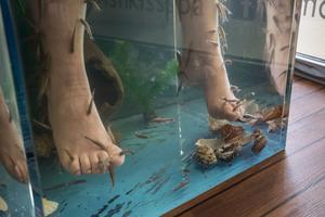 Fiskarna äter döda hudceller