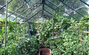 I de tre drivhusen odlas bland annat gurka, vattenmelon och tomat.