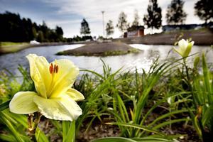 Den nya anläggningen för dagvattenrening/parken nedanför Västberga koloniområde är en fröjd för ögat, anser Sören Molander.