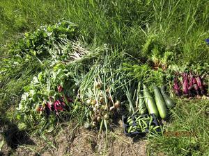 På så vis kan den som vill antingen odla sin egen ekologiska mat, starta en kooperation eller helt ideellt tillhandahålla lokal mat på sin nyvunna fritid genom allmänningar, skriver debattören.