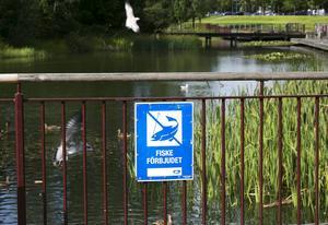Efter rapporter om tjuvfiske i Vattenparken skärps bevakningen.
