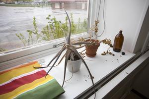 De övergivna krukväxterna har törstat länge.