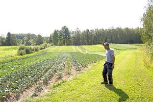 Stekande sol har gjort att växterna vuxit lite för snabbt och blivit klara för tidigt.