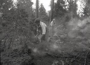 Skogsbrand i Frötuna 1955.