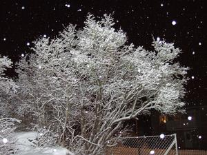 Söndagskvällens fotografering resulterade i en blixtbelyst syrenbuske och dito snöflingor som yrde omkring mig.