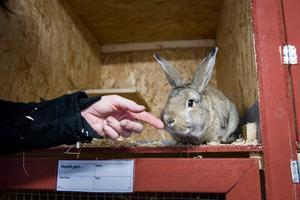 Obs! Kaninen på bilden har inget med händelsen att göra.
