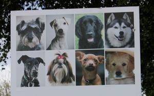 Ovanligt grepp. På Lokala partiets valaffisch är medlemmarna framställda som hundar.