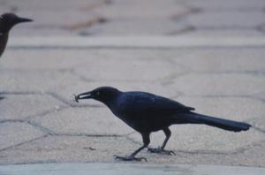 Promenerade på en gata i Oaxaca, när denna fågel gick förbi med sitt rov