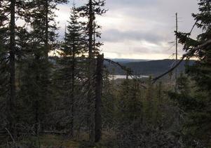 Utsikt från Stora Korpimäkis topp.