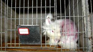 Majoriteten av den ull som används i kläder av angora kommer från pälsfarmer i Kina där pälsen rycks från levande kaniner. Det hävdar djurrättsorganisationen Peta, som dokumenterat djurplågeriet med dold kamera.
