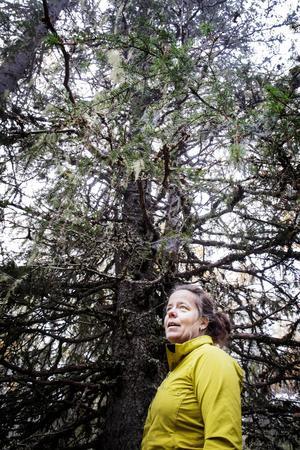 En nära hotad art är garnlaven. I Sveriges norra delar finns det gott om den, men längre söderut är den svårare att hitta.    – Står man med skogsbrukare i Norrland och säger att den är rödlistad blir de förvånade för de tycker att den finns överallt, men det är bara här.