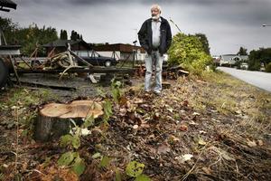 Nedsågade. Här på Bertil Ottermans tomtgräns stod fram till förra veckan sex stora lönnar. Halva stubbarna står på kommunens mark där den nya gångbanan ska byggas för att Kvisthamraborna tryggt ska kunna ta sig till och från bussen.
