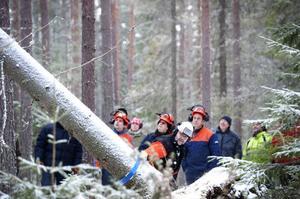 Skogsstyrelsens Leif Södervall visar under en kursdag hur man på bästa - och säkraste - sätt fäller ett offer för stormen.