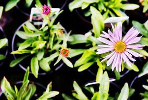 Blommor säljer fortfarande bra på trädgårdsmarknaden, även om den tydligaste trenden är sådant som går att äta.