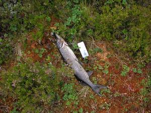 Fiskaren lämnade också efter sig förpackningen till den spinnare han använt.