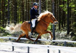 Eliten finns på plats i helgen när Kraftur anordnar nationell tävling för Islandshästar. Världsmästaren Gudmundur Einarsson (bilden) var en av de mest meriterade. Han slutade på 13:e plats med unghästen Ómur frá Feti i klassen PP1 Stilpass. Vann gjorde Vignir Jónasson på dubbla världsmästarhästen Kraftur frá Bringu.