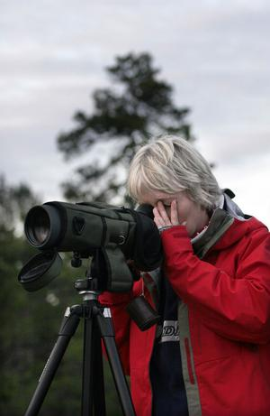 Katarina Larsson Widén tittar på fåglar.