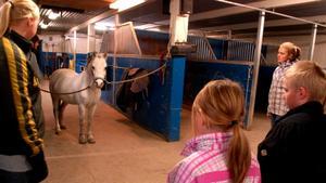 När Heby ryttarförening och Häst i Heby ordnade en tisdag om vad som gör en häst säker pratade de om hur viktigt det är att prata med den fyrbenta vännen. Foto: Lina Svalbro