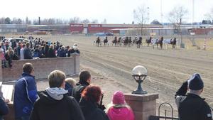 Bland de tävlande hästarna fanns bland annat Volstead, D.D.´s Hitman och Månprinsen A.M.