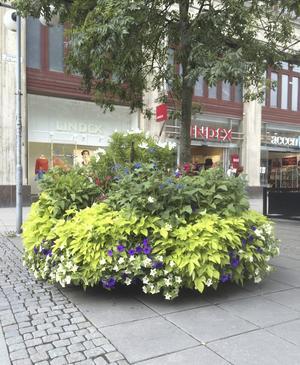Praktfullt. På Storgatan.