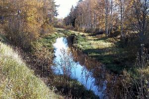 Svartån. Ån i höstfärger. Nu har Länsstyrelsen i Falun konstaterat att det finns höga halter av olika miljögifter i åns vatten.