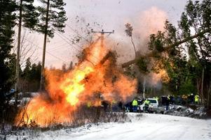 Det blir en rejäl smäll och eldsflammorna slår upp när sprängladdningarna som sitter fast på trädstammen utlöses. På ett ögonblick kapas trädet samtidigt som personalen är i säkerhet en bit därifrån.