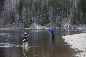 Många linor i luften. Det är kastkurs för flugfiskare i Viforsen, Ljungan. Under två dagar höll kastinstruktör Mattias Drugge, Sveriges ende heltidsproffs, kurs.