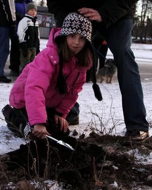 Växtkraft. Emma Bernhoff satte ner lökar som ska blomma i vår.