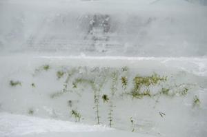 Infruset sjögräs fungerar som naturlig dekoration.