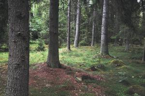 I dagarna samlas skogsägarföreningarna Norrskog, Mellanskog och Södra på skogsmässan MellanskogsElmia. Viktiga frågor kommer att diskusteras.