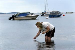 Sofia Öström tar för kommunens räkning vattenprover på Slädaviken. Proverna visar på kraftigt förhöjda halter av bakterier.
