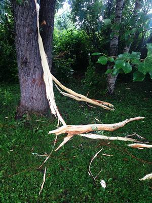 Maria Strömqvist var ensam hemma när blixten slog ned. Hennes föräldrar blev båda förvånade när de kom hem och såg vad som hänt pilträdet som är stort och gammalt.