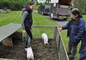 Kelade och tittade på grisar gjorde Ingrid Lundin och Linnea Tholander i mitten, hon är praktikant på 4H-gården i Gränby i Uppsala.