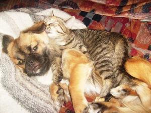 """IAN OCH MISSAN TEQILA TRIVS TILLSAMMANS.""""Jag är både katt- och hundmänniska. Som ni se trivs de i lag. Hunden heter Ian och katten Missan Teqila. Foto: Ewa Hansson Magnusson, Lillhärdal."""