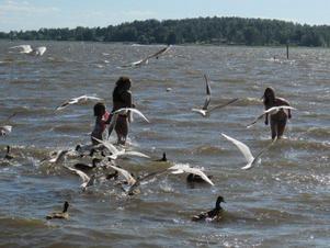 En härlig dag på Björnön, fåglarna ska ju få bröd som vi har tagit med oss....varför inte bada samtidigt, tyckte Sara Evelina och Louise...Det blev många skratt när fåglarna samlades kring dem och gjorde dykningar efter brödet.....