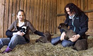 Elin Eriksson och Lena Andersson i Torpa tillsammans med några av årets lammungar.