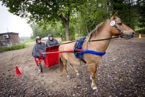 Hästen Hroftur stannar gladeligen för att visa upp sig.