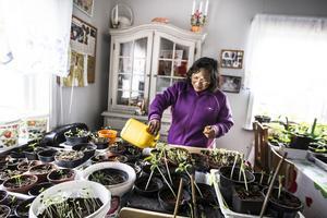 I ett litet hus ute på gården planterar Pat blommorna som sedan ska få växa ute i trädgården.