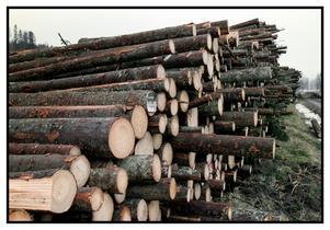 För skogsindustin och livsmedelinsdustin, två transportintenvia näringar, kan vägslitageskatten få tydliga konsekvenser. Timmer- och mjölktransporter fördyras.