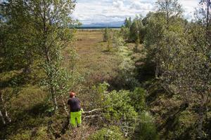 Johan Wallin från Reaxcer röjer upp intill ett av de diken, som skall fyllas med torv och träd från Ånnsjöns myrar.