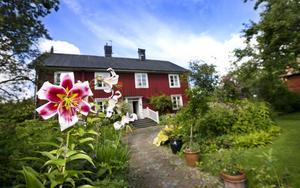 Lilja. Den höga, storblommande liljan Sheherazade ären av Monicas favoriter i trädgården. Hon gillar både färgen och formen på den väldoftande skönheten.