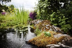 Den känns som man kliver in i en annan värld när man besöker Wictoria och Peter Boijes trädgård i Fanbyn.