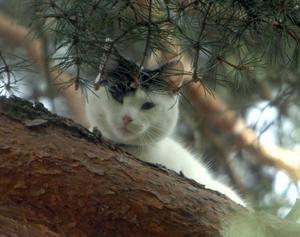 Katten Kotten blev ännu räddare när brandmännen sågade i grenen.