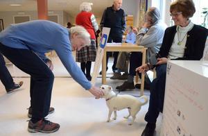 Seniordag. Willy Andersson hälsar på hunden Zelda som tillsammans med Inger Ljungkvist från Ställdalens PRO brukar hälsa på de boende på Koppargården.
