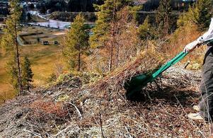 Olagligt och riskfyllt. Att slänga trädgårdsavfall i niporna ökar rasrisken.